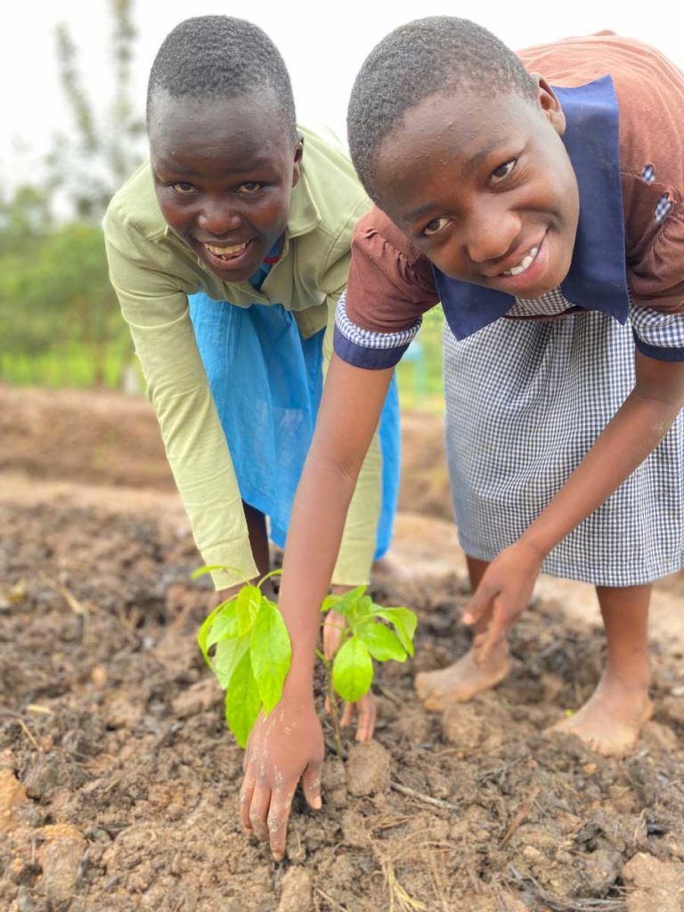 Planting a mango tree
